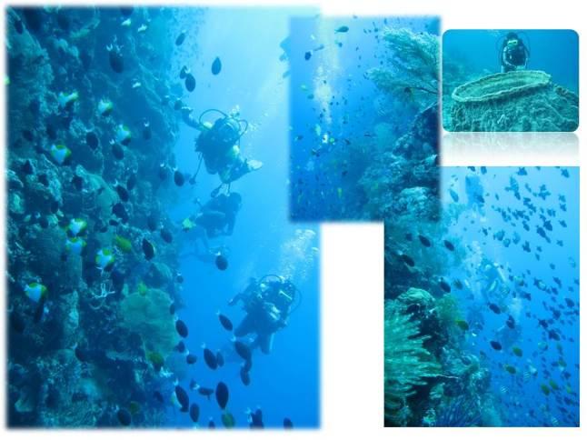 Wakatobi underwater (photo captured by Seto Ariyadi)